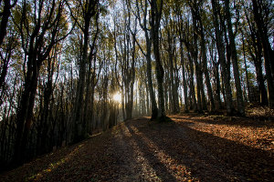 Beechwood (archivie Parco Foreste casentinesi)