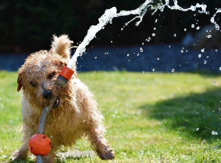 cane e acqua.jpg