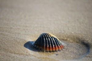 La scomparsa delle spiagge: i nuovi dati della Commissione europea