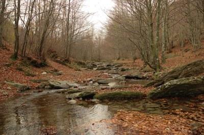 foto: Torrente Brasimone (Fonte Archivio Parco Lago di Suviana e Brasimone)