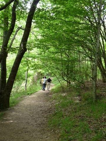 foto: Foreste Casentinesi (Autore Maria Vittoria Biondi)