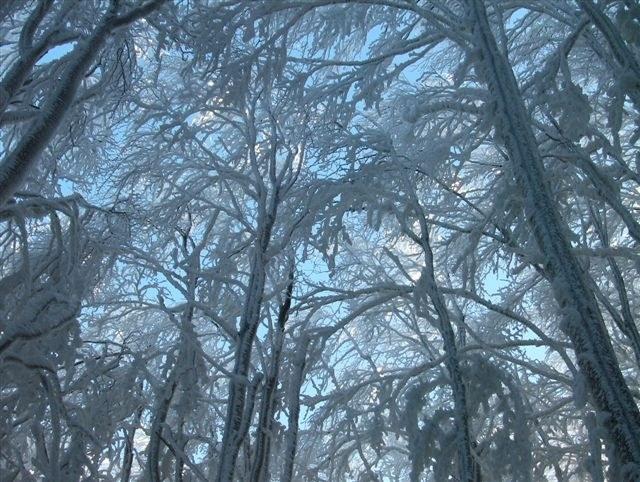 foto: Faggeta in inverno (Autore Fiorenzo Rossetti)