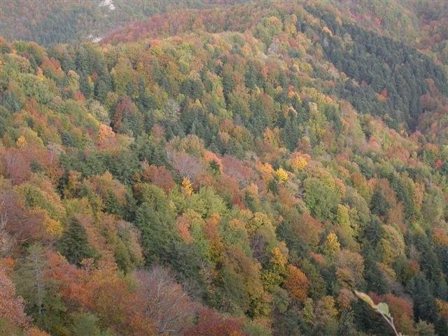 foto: Foreste casentinesi (Autore Nevio Agostini)