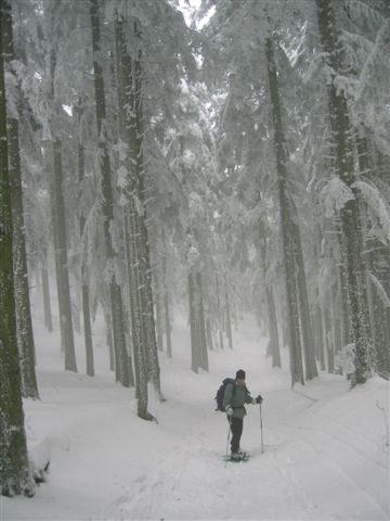 foto: Foresta di Campigna (Autore Fiorenzo Rossetti)