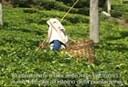 Fairtrade People 2009 - Spot 2