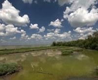 La riserva della biosfera del delta del Po