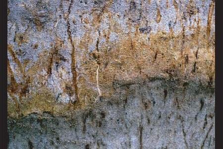 Pianura deltizia - particolare di un profilo di suolo