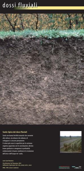 Suolo tipico dei dossi fluviali