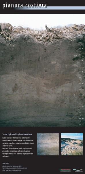 Suolo tipico della pianura costiera