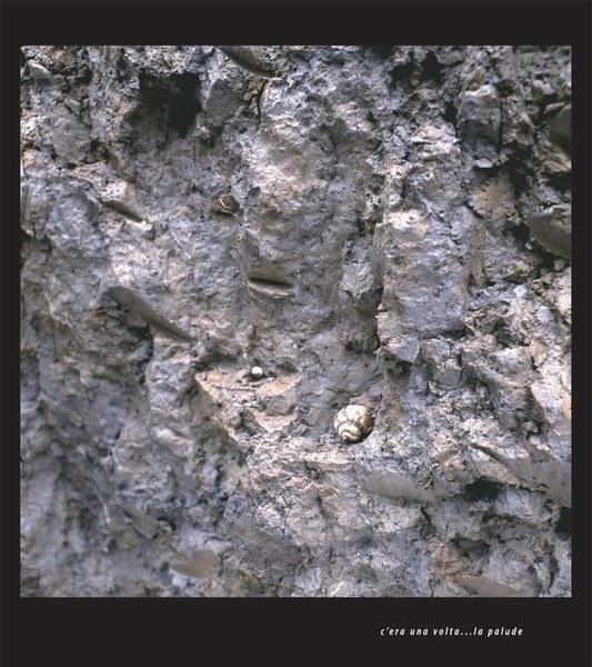 Valli bonificate - particolare di un profilo di suolo