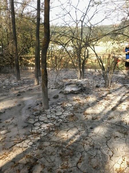 Salse di Nirano dentro un bosco di recente impianto