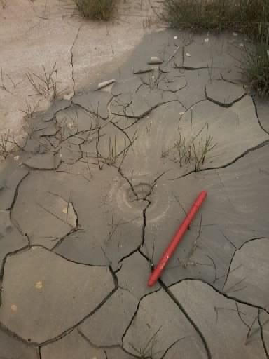 Impronta sul fango non consolidato