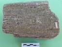 Legno gessificato (frammento di tronco)