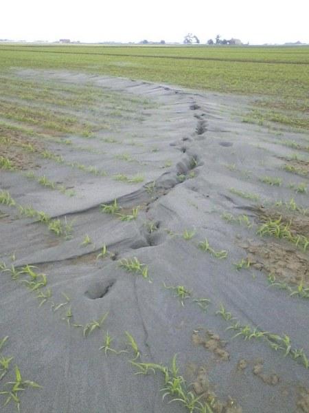 Effetti sisma M5.9 Pianura Padana - Emiliana