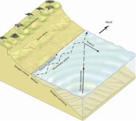 Schema 3D dinamica costiera