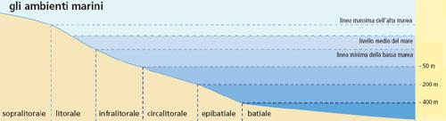 Gli ambienti marini