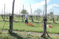 La qualità dei suoli agricoli: pubblicato il report sul primo anno di monitoraggio