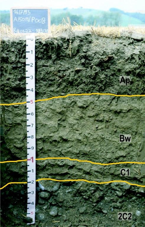 Profilo di suolo