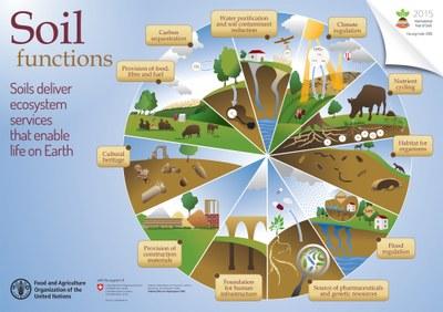I servizi svolti dal suolo permettono la vita sulla terra (FAO, 2015)