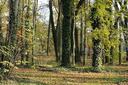Servizi ecosistemici del suolo