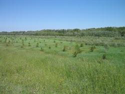 Foto: Area di riequilibrio ecologico Bisana (Archivio Provincia di Bologna)