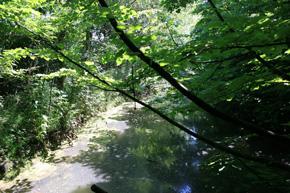 foto:canale nel Fontanile di Montale canale (autore M.Gualmini)