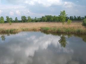 """foto: veduta della zona umida in località """"Valle Sopra"""" (Archivio Provincia di Modena)"""