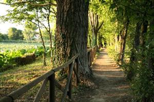 foto: Visione primaverile del sentiero che costeggia il bacino del Parco del Loto (autore Giovanni Bartolotti)