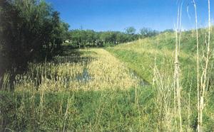 Vista generale della zona umida - autore C.Mori