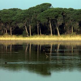 La pineta di San Vitale si specchia nelle acque della piallassa