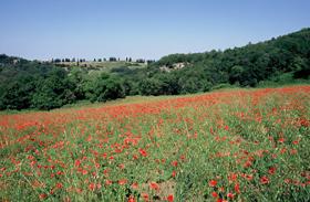 foto: dolina della Spipola - autore F.Liverani (Archivio Servizio Parchi)