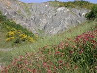 foto: calanchi in fiore - Archivio Parco