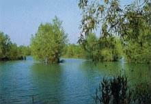 Foto di apertura Riserva naturale Casse di espansione del Fiume Secchia