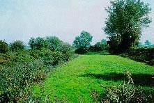 Foto di apertura Riserva naturale Parma Morta