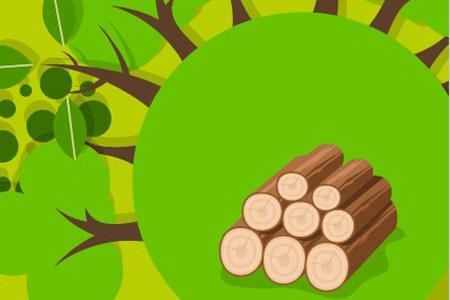 Regolamento forestale
