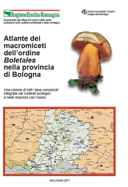 Atlante Boletus