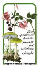 Flora spontanea protetta, prodotti del sottobosco e funghi