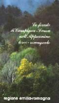 Le foreste di Campigna-Lama