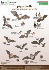 Poster Fauna minore