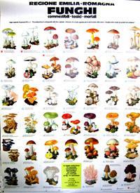 Poster Funghi e flora