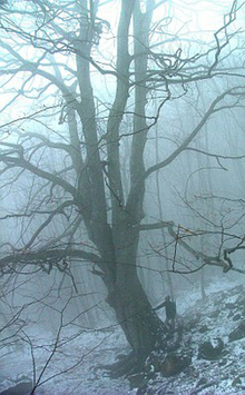 Nebbia e gelo sul Faggio della Valdanda a Tredozio (FC). Foto Sandro Bassi