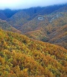 Le foreste dell'Alto Savio in veste autunnale, nel Parco Nazionale delle Foreste Casentinesi. Foto Fabio Liverani
