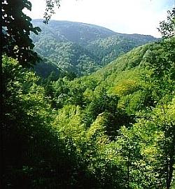Sguardo sulla copertura forestale compatta e diversificata delle Foreste Casentinesi in  versante romagnolo. Foto Stefano Bassi