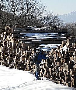 Catasta di legname da opera. Foto Stefano Bassi