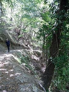 Pista forestale a fondo naturale di recente apertura. Foto Stefano Bassi, archivio personale