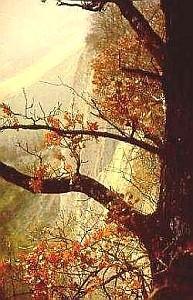 Roverella (Quercus pubescens) in ambiente rupestre. Foto Stefano Bassi, archivio personale