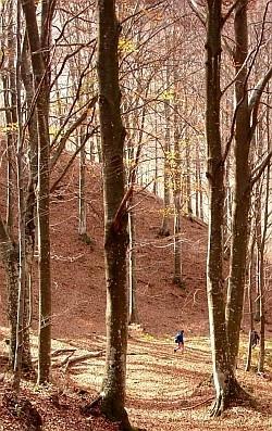 Nelle foreste demaniali, di interesse pubblico, prevalgono l'alto fusto e finalità protettive e di conservazione. Foto Sandro Bassi