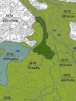 Carta forestale provincia di Modena, dintorni di Riolunato. Esempio di rappresentazione con sigle dei poligoni. Elaborazione Servizio Parchi e Risorse forestali.