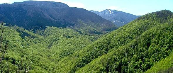 Foreste appenniniche al risveglio primaverile. Da foto Sandro Bassi, archivio personale