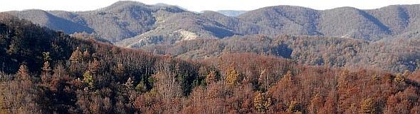 Foreste appenniniche in veste autunnale. Foto Stefano Bassi, archivio personale